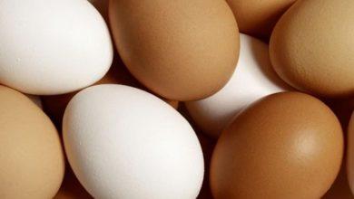 """صورة البيض المخصب"""".. تفاصيل اللقاح البخاخ لكورونا"""