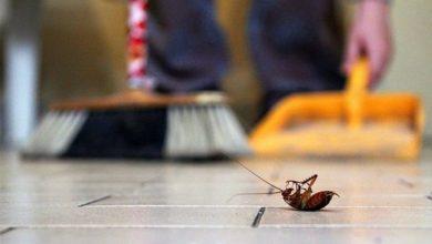 صورة للتخلص من الحشرات… إليكم بعض العلاجات الطبيعية