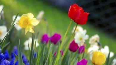 صورة الطقس الربيعي المستقرّ يرافقنا…
