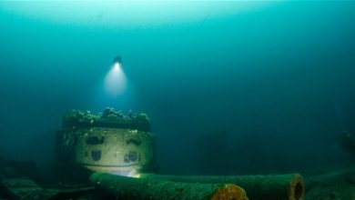 صورة أعماق البحار… وحوش صغيرة وعالم غامض!